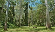 O'Sullivans picnic area tall trees, Myall Lakes National Park. Photo: John Spencer