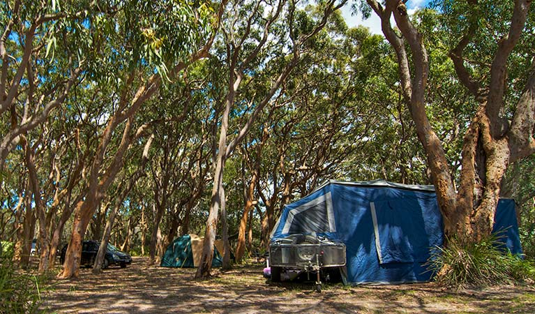 Stewart and Lloyds campground, Myall Lakes National Park. Photo: John Spencer/NSW Government