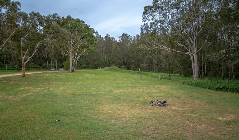 Grassy campsites set amongst trees at Violet Hill campground and picnic area in Myall Lakes National Park. Photo: John Spencer © DPIE