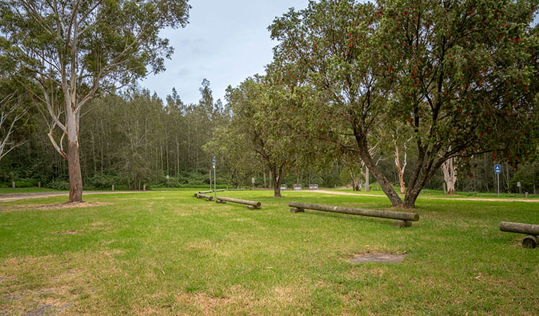 Grassy, unmarked campsites at Violet Hill campground in Myall Lakes National Park. Photo: John Spencer © DPIE