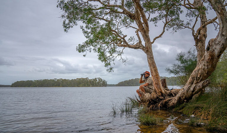 A man beside the lake looking through a pair of binoculars at Violet Hill campground in Myall Lakes National Park. Photo: John Spencer © DPIE