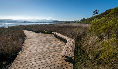 Jewfish walk, Nadgee Nature Reserve. Photo: John Spencer