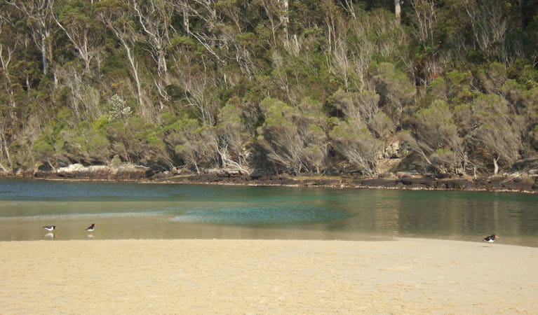 Nadgee Wilderness walk, Nadgee Nature Reserve. Photo: Tom Gray.