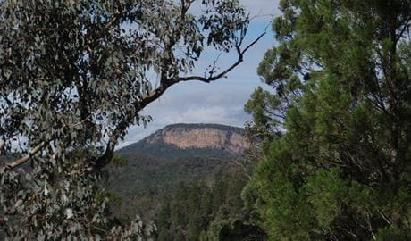 Mount Murga walking track, Nangar National Park. Photo: A Lavender/NSW Government