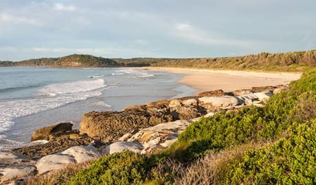 Burrawang track, Narrawallee National Park. Photo: Michael van Ewijk