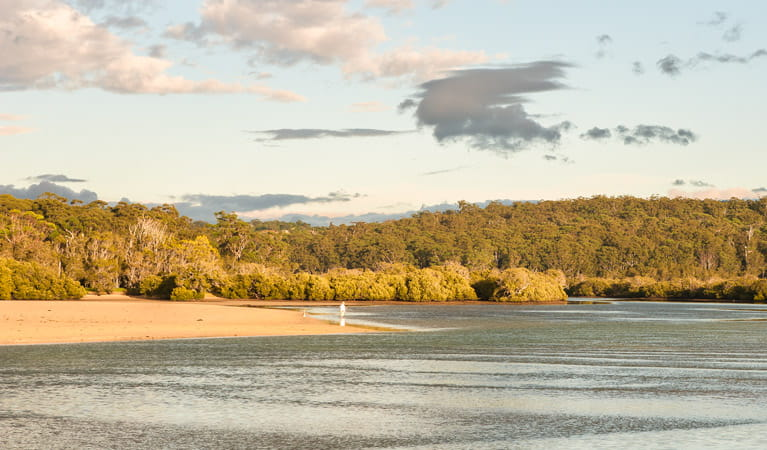 Narrawalle Inlet walking track, Narrawallee National Park. Photo: Michael van Ewijk