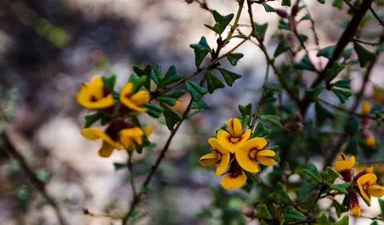 Wildflowers, Nattai National Park. Photo: John Spencer
