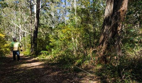 Starlight's trail, Nattai National Park. Photo: John Spencer/NSW Government