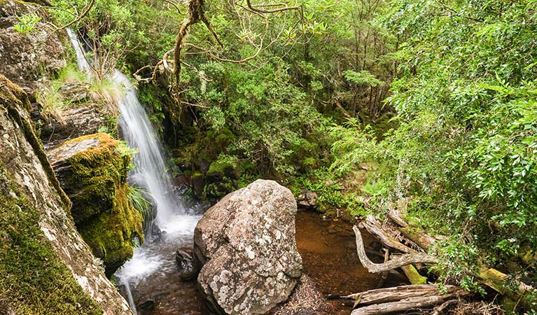 Tea Tree Falls walking track, New England National Park. Photo: J Evans