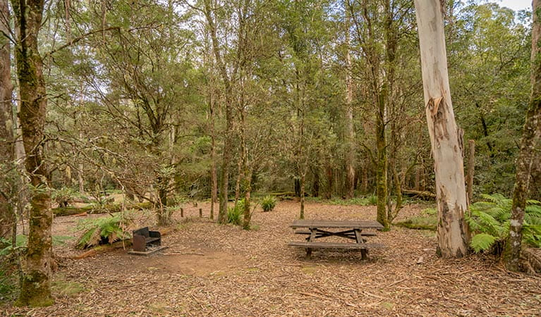 Thungutti campground in New England National Park. Photo: John Spencer/OEH