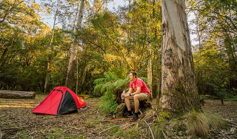 Man sitting next to his tent at Thungutti campground in New England National Park. Photo: John Spencer/OEH