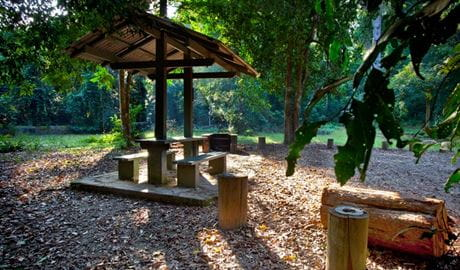 Cedar Park picnic area, Ngambaa Nature Reserve. Photo: Rob Cleary