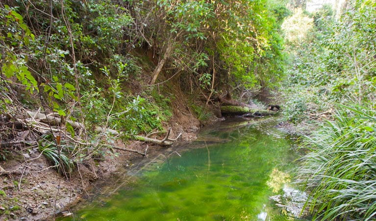 Stockyard Creek and surrounding forrest, Ngambaa Nature Reserve. Photo: Rob Cleary