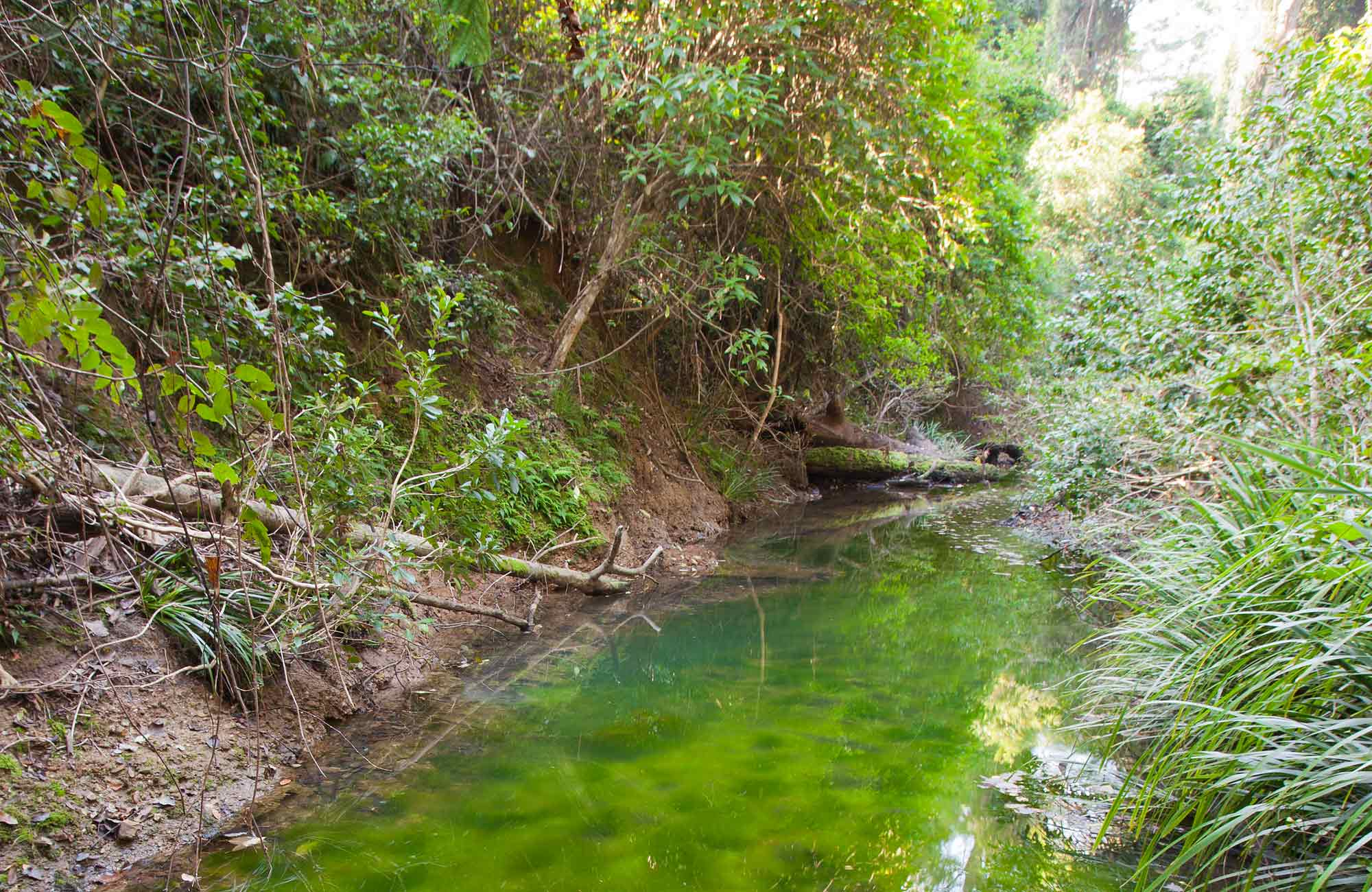 Stockyard Creek and surrounding forest, Ngambaa Nature Reserve. Photo: Rob Cleary