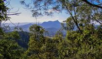 Historic Nightcap walking track, Nightcap National Park. Photo: Brian McLachlan © DPIE
