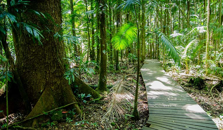 Boardwalk to Minyon Falls lookout passing through lush, shaded rainforest. Photo: John Spencer © DPIE