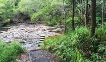 Stepping stones across the creek on Minyon Falls walking track. Photo: Natasha Webb © DPIE