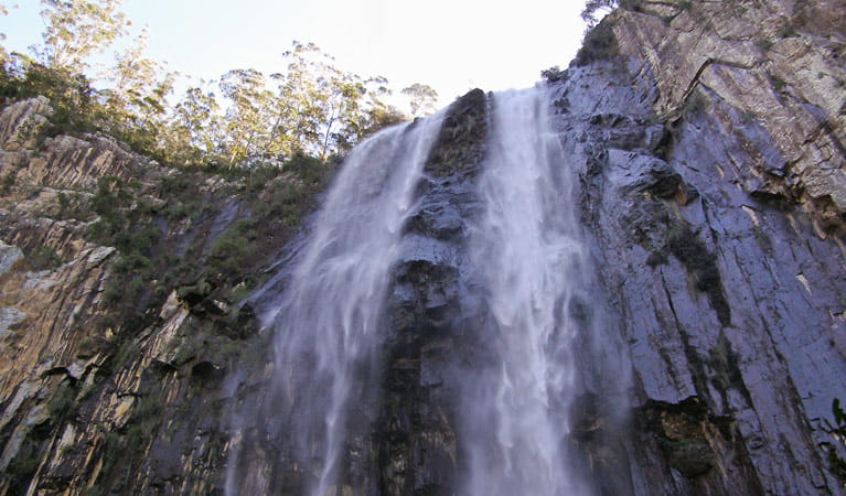 Minyon Falls walking track, Nightcap National Park. Photo: B. McLachlan