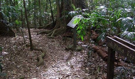 Signage marks the Pholis Gap turnoff on Mt Matheson track, Nightcap National Park. Photo: B. McLachlan