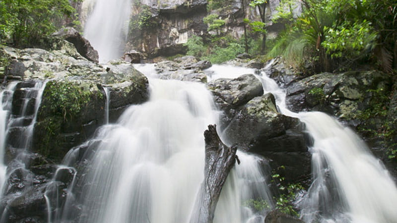 Protesters Falls, Nightcap National Park. Photo: Hamilton Lund