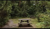 Picnic area, Nymboi-Binderay National Park. Photo: © Rob Cleary