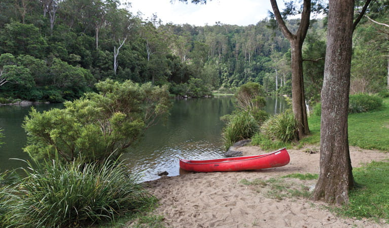 Platypus Flat campground, Nymboi-Binderay National Park. Photo: Rob Cleary/NSW Government