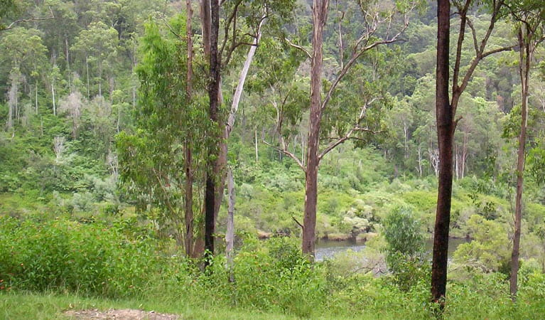 Nymboida River campground, Nymboida National Park. Photo: D Redman