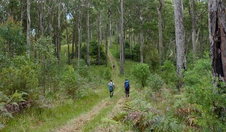 Green Gully track, Oxley Wild Rivers National Park. Photo: Piers Thomas