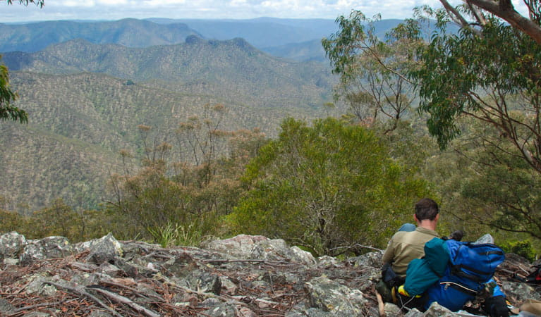 Green Gully track, Oxley Wild Rivers National Park. Photo: Shane Ruming