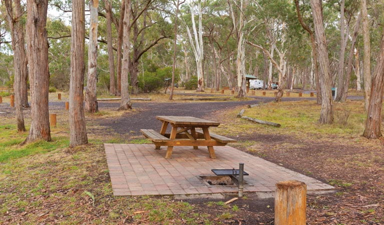 Picnic table at Apsley Falls campground, Oxley Wild Rivers National Park. Photo: Rob Cleary/DPIE