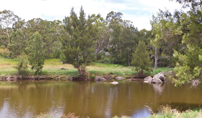 Blue Hole picnic area river, Oxley Wild Rivers National Park. Photo: Rob Cleary