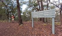 A person on McDirtys walking track, Oxley Wild Rivers National Park. Photo: Rob Cleary