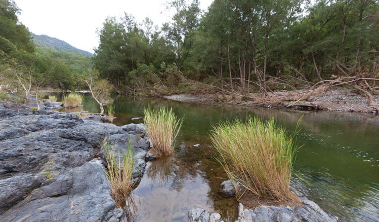 Aspley River nearby Riverside campground and picnic area, Oxley Wild Rivers National Park. Photo: Rob Cleary/DPIE