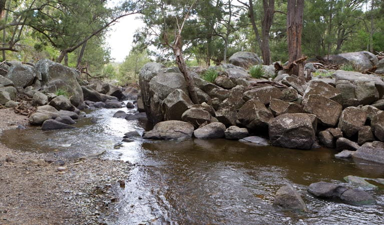 Threlfall walking track, Oxley Wild River National Park. Photo: Rob Cleary