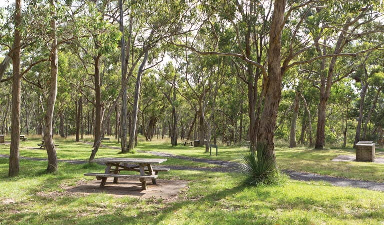 Picnic tables in the Wollomombi Gorge and Falls picnic area. Photo: Rob Cleary