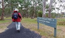 A man walking along Wollomombi walking track in Oxley Wild Rivers National Park. Photo: Rob Cleary