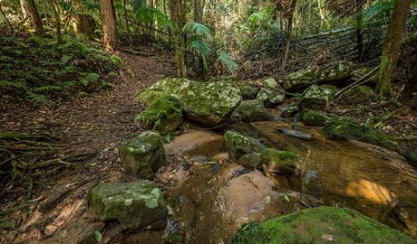 Great North walk, Palm Grove Nature Reserve. Photo: John Spencer