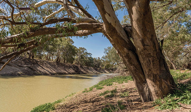 The Darling River at Coach and Horses campground. Photo: John Spencer © DPIE