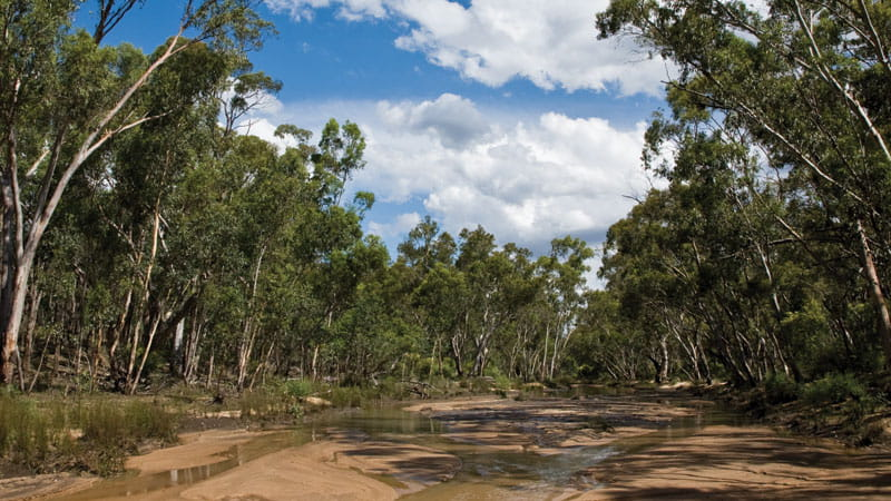 Outback landscape in Pilliga National Park. Photo: Rob Cleary