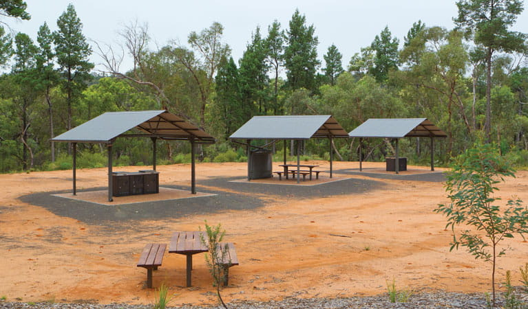 Picnic tables at the Sculpture in the Scrub campground. Photo: Rob Cleary