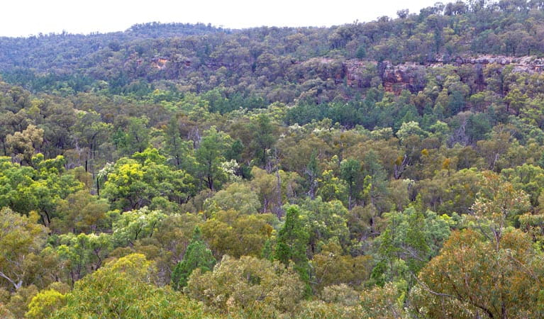 Scrub of Pilliga National Park. Photo: Rob Cleary