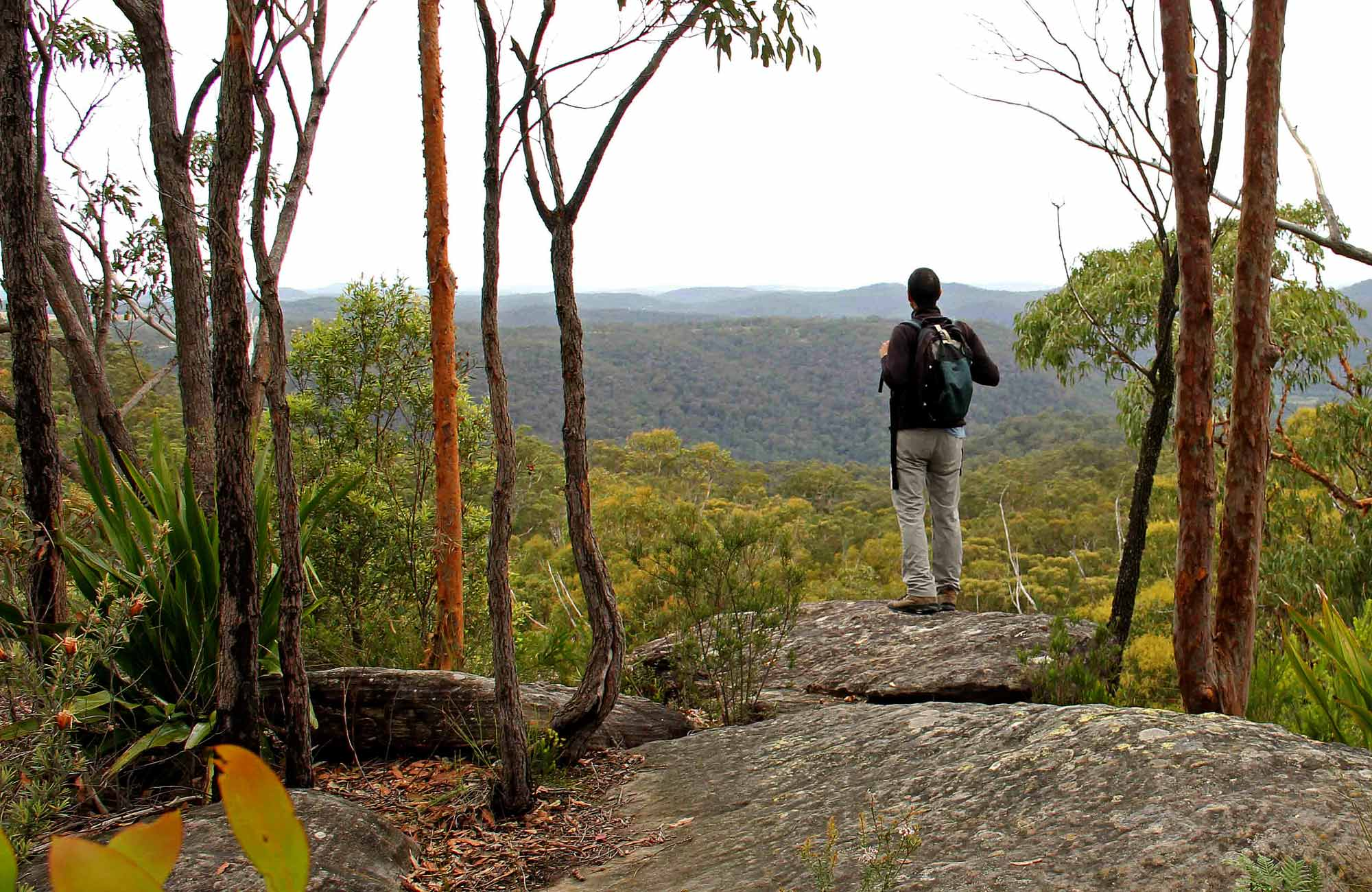 Mount Olive Lookout, Popran National Park. Photo: John Yurasek