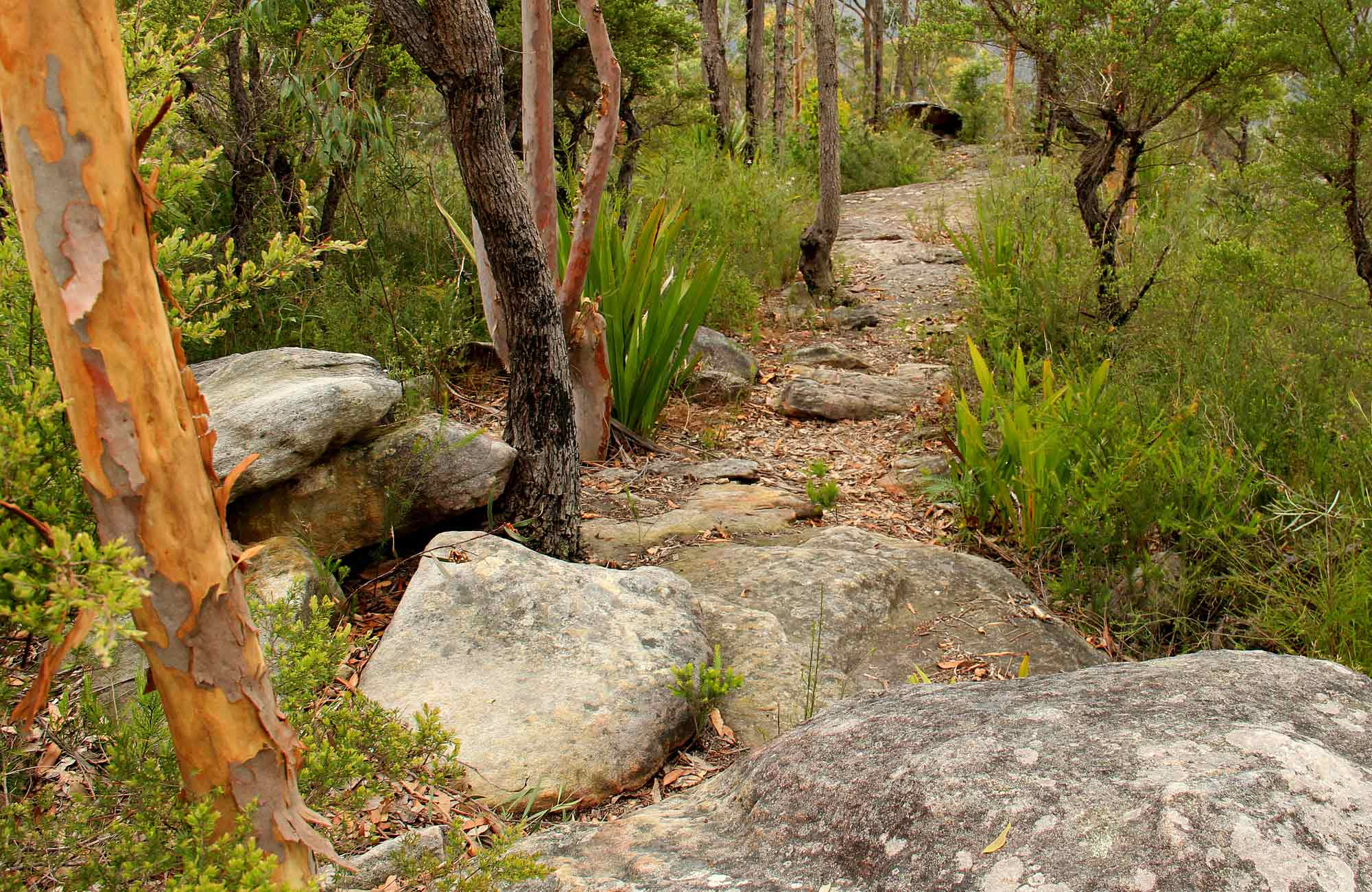 Mount Olive Track, Popran National Park. Photo: John Yurasek