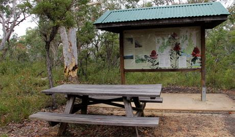 Picnic table at Ironbark picnic area. Photo: John Yurasek