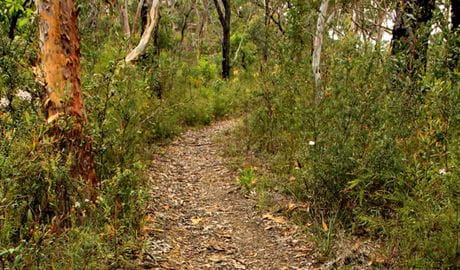 Mount Olive trail, Popran National Park. Photo: John Yurasek