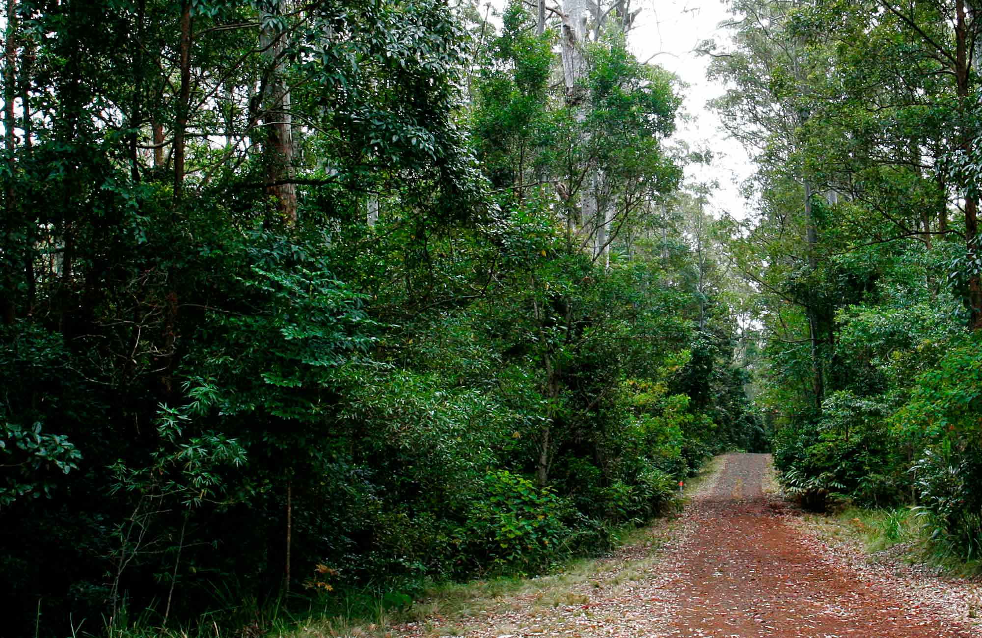 Cambridge Plateau Scenic Drive, Richmond Range National Park. Photo: J Atkins/NSW Government