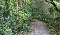 Rainforest walking track, Robertson Nature Reserve. Photo: Michael van Ewijk
