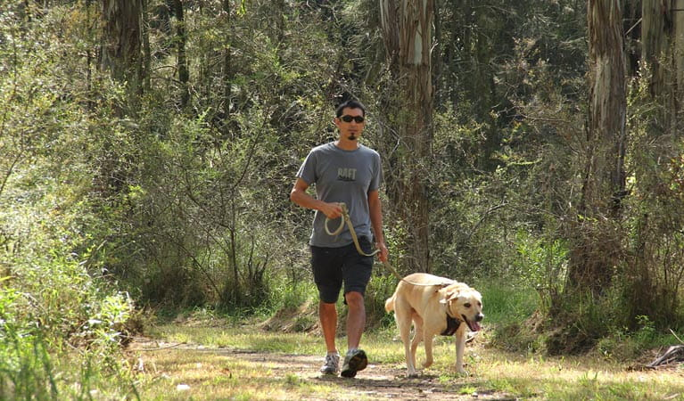 Man walking a dog in Rouse Hill Regional Park. Photo: John Yurasek