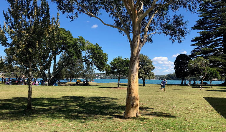 Families picnicking under the trees at Bonnie Vale picnic area. Photo: OEH/Natasha Webb