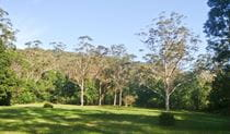 Red Cedar Flat picnic area, Royal National Park. Photo: Andy Richards/NSW Government